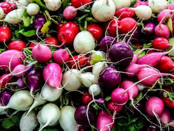 immune-food-radish